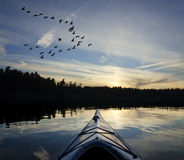 Kayak and Geese at Sunset Royalty Free Stock Photo