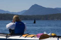 Kayak and orca. Orcas are passing a kayak in blackfish sound Royalty Free Stock Image