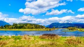 Kayak sul fiume di Alouette visto dall'argine a Pitt Polder vicino all'acero Ridge in Columbia Britannica, Canada Fotografia Stock Libera da Diritti