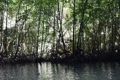 Kayak trip into the mangrove forest in Ao Thalaine in Krabi in Thailand, Asia. Kayak trip into the mangrove forest in Ao Thalaine in Krabi in Thailand in Asia stock photo
