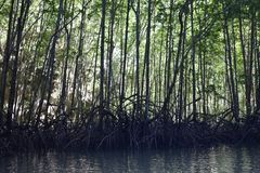 Kayak trip into the mangrove forest in Ao Thalaine in Krabi in Thailand, Asia. Kayak trip into the mangrove forest in Ao Thalaine in Krabi in Thailand in Asia royalty free stock photography