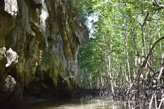 Kayak trip into the mangrove forest in Ao Thalaine in Krabi in Thailand, Asia. Kayak trip into the mangrove forest in Ao Thalaine in Krabi in Thailand in Asia stock images