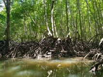 Kayak trip into the mangrove forest in Ao Thalaine in Krabi in Thailand, Asia. Kayak trip into the mangrove forest in Ao Thalaine in Krabi in Thailand in Asia stock image
