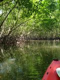 Kayak trip into the mangrove forest in Ao Thalaine in Krabi in Thailand, Asia. Kayak trip into the mangrove forest in Ao Thalaine in Krabi in Thailand in Asia royalty free stock photo