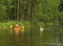 kayaker κύκνοι στοκ εικόνα