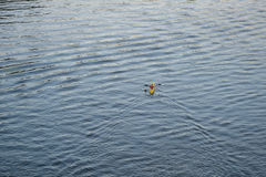 Kayaker στην επιφάνεια ποταμών Στοκ φωτογραφία με δικαίωμα ελεύθερης χρήσης