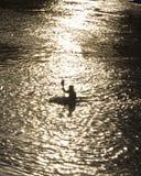 Kayaker στο σούρουπο Στοκ φωτογραφία με δικαίωμα ελεύθερης χρήσης