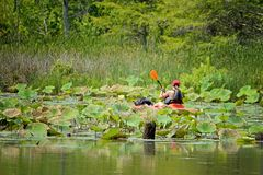 Kayaker in the back bay of Virginia Beach royalty free stock photo