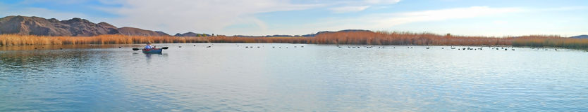 Kayaker and Coots - Panorama Royalty Free Stock Photos