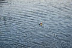 Kayaker op rivieroppervlakte Royalty-vrije Stock Fotografie