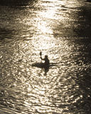 Kayaker przy półmrokiem Zdjęcie Royalty Free