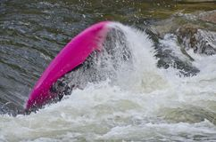 Kayaker renversant dans le Rapid de Whitewater Photos stock
