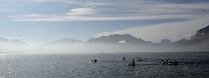 Kayakers на каяке и каное делая гонку на озере Анси Стоковая Фотография RF