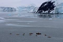 Kayakers antárticos silueteados Fotografía de archivo