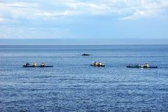 Kayakers de mer et petite baleine Photographie stock libre de droits