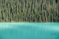 Kayakers on Lake Louise backdropped by a forest of giant fir tre Stock Image