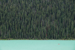 Kayakers on Lake Louise backdropped by a forest of giant fir trees Stock Images