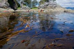 Kayakers och jätte- brunalg nära Thomas Island Royaltyfri Foto