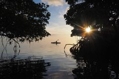 Kayaking στη μέση των μαγγροβίων βασικού Biscayne, Φλώριδα στοκ εικόνα