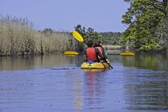 Kayaking στο εθνικό καταφύγιο άγριας πανίδας στον πίσω κόλπο, παραλία Βιρτζίνια της Βιρτζίνια στοκ εικόνα με δικαίωμα ελεύθερης χρήσης