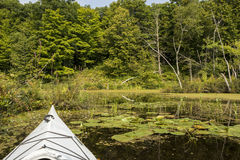 Kayaking in a Conservation Area Royalty Free Stock Image