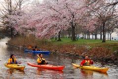 Kayaking in de Lente royalty-vrije stock afbeelding