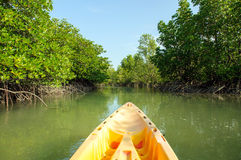 Kayaking door mangrovebos Stock Foto's