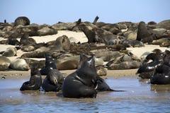 Kayaking em torno do ponto do pelicano Imagem de Stock