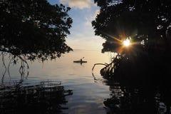 Kayaking entre os manguezais de Key Biscayne, Florida imagem de stock