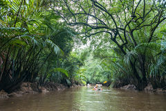 Kayaking at Klong Sung Nae, Thailand's Little Amazon. Kayaking through lush green jungle and wild mangrove swamp at Klong Sung Nae, Little Amazon, Phang Nga Stock Image