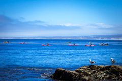Kayaking in Monterey Bay. Group of Kayakers in  beautiful early morning in Monterey Cay CA Stock Photos