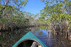 Kayaking nos marismas Foto de Stock