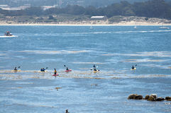 Kayaking in the ocean near shore. Kayaking in the ocean near shore on Monterey Bay, CA Royalty Free Stock Photos
