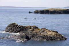 Kayaking op zee stock afbeelding
