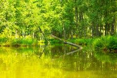 Kayaking par la rivière sauvage en Pologne (rivière d'Omulew) Photo libre de droits