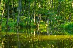 Kayaking par la rivière sauvage en Pologne (rivière d'Omulew) Images libres de droits