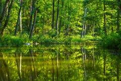 Kayaking par la rivière sauvage en Pologne (rivière d'Omulew) Photos stock