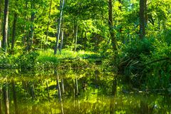 Kayaking pelo rio selvagem em poland (rio de Omulew) Imagem de Stock