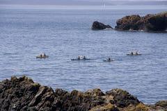 Kayaking at Sea Stock Image