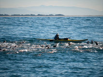 Kayaking with seals. Kayaking out in the ocean close to Monterrey California to watch the wildlife. During winter the seals gather in groups and hunt together Stock Photos