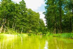 Kayaking by wild river in poland (Omulew river). Kayaking by wild river in forest in poland (Omulew river near Nidzica). Summer recreation Royalty Free Stock Images