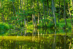 Kayaking by wild river in poland (Omulew river). Kayaking by wild river in forest in poland (Omulew river near Nidzica). Summer recreation stock photography