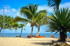 Kayaks at the beach. Kayaks under cocnut palms on a beach Royalty Free Stock Photo