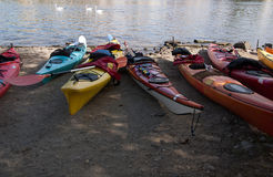 Kayaks on the river bank. Swans on the water stock image