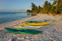 Kayaks on sandy tropical beach with coconut trees Royalty Free Stock Image