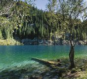Kayandy lake (2). Peculiarity of this lake are dry trunks of fir-trees, protrude is direct from water. There is it in Kazakhstan Royalty Free Stock Photography