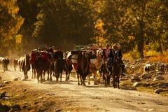 Kazach poganiacz Zdjęcia Stock