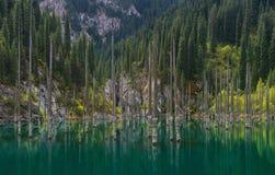 Kazajistán, Forest Of Mountain Lake Kaindy hundido Troncos de árboles Spruce en agua Vista natural de Kazajistán en el Mou del Ty Fotos de archivo