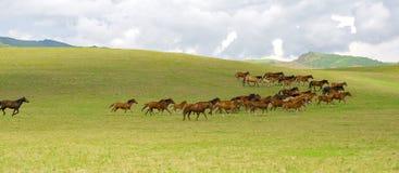 kazakh del cavallo Immagini Stock Libere da Diritti