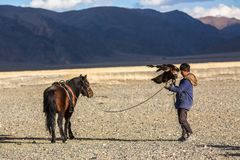 Kazakh Eagle Hunter Berkutchi with horse while hunting to the hare with a golden eagles on his arms. SAGSAY, MONGOLIA - SEP 28, 2017: Berkutchi Eagle Hunter with Royalty Free Stock Photo